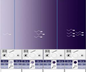 SwimCount Resultat grafisk